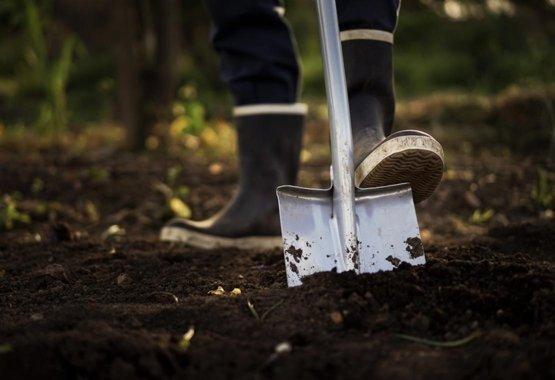 Sázejte rostliny s lehkostí