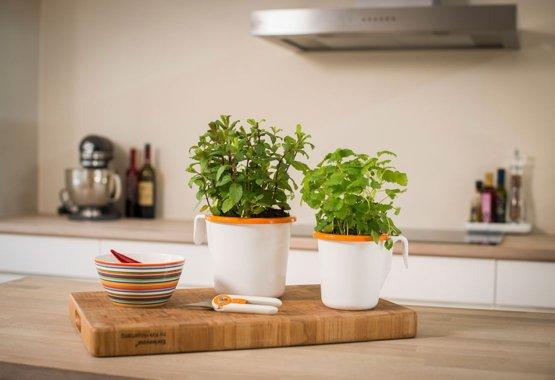 Pěstujte bylinky přímo ve vlastní kuchyni