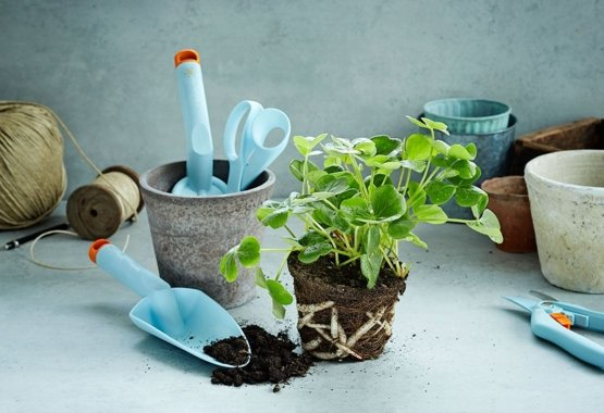 Oživte svou zahradu dalšími barvami
