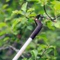 Nůžky Light™ zahradní univerzální lehké UP69