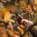 PowerGear™ X nůžky zahradní převodové dvoučepelové (L) PX94
